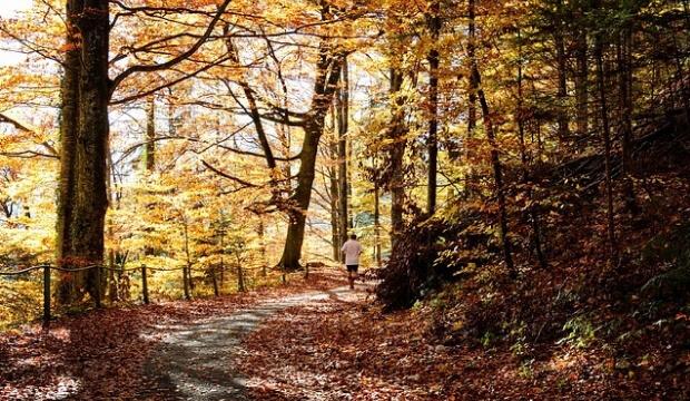 mejores bastones trail running